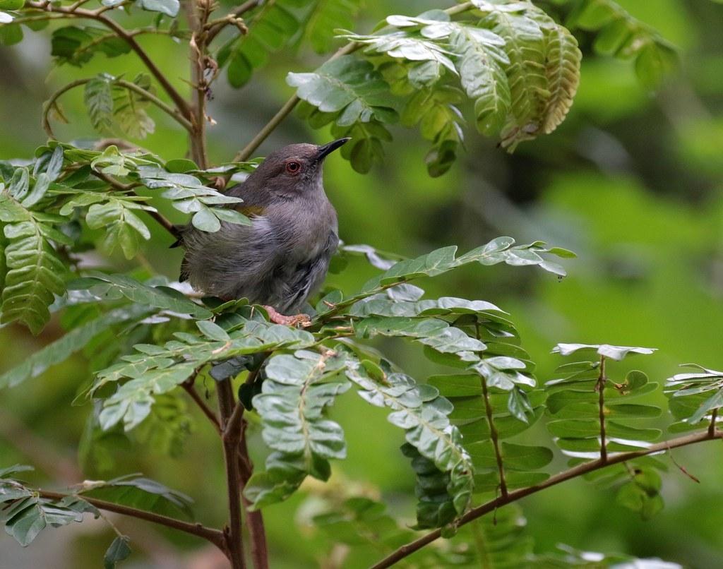 bird watching in Bwindi Impenetrable National Park